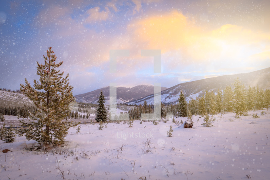 Snowflake flurries falling on Rocky Mountain landscape in Colorado at sunset with evergreen trees on slopes while it is snowing