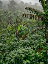 coffee farm in Honduras