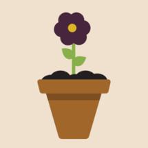 flower growing in a pot