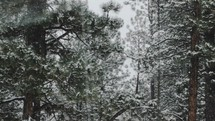 falling snow in a forest