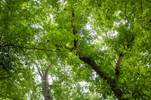 green leaves in a summer forest