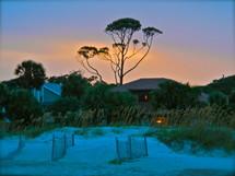 Beach house with a tall tree