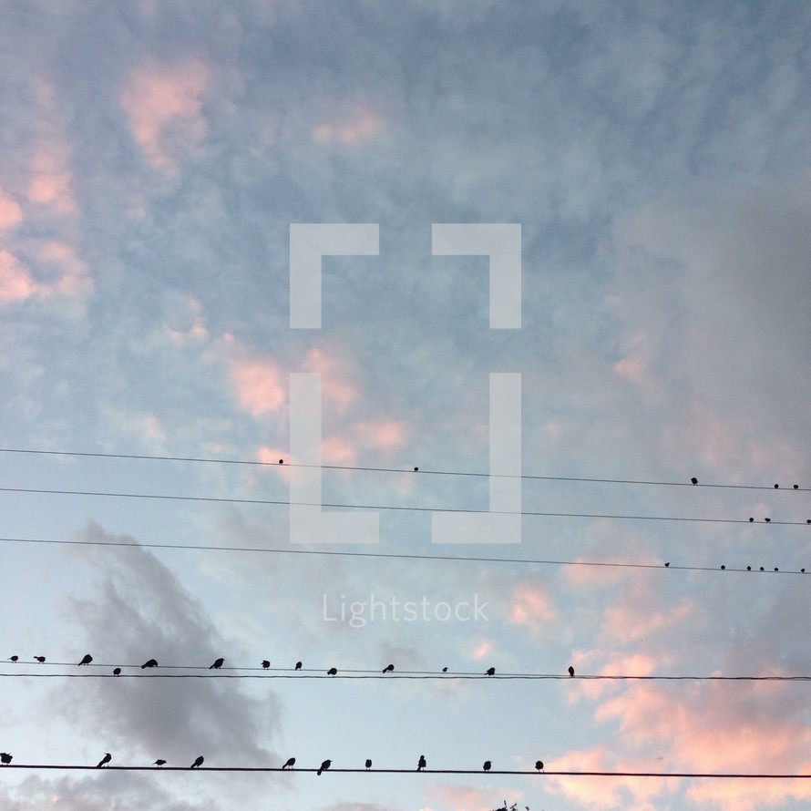Birds sitting on electric wires
