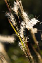 Weeds.