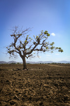 isolated tree in a desert