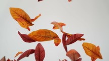 falling brown leaves on a white background