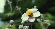 bees on flowers