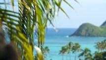Palm Tree with a Lanikai view