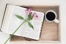 flower on the pages of an open Bible sitting in a tray