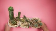 potted cactus centerpiece