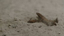 slow motion of nails hitting ashes