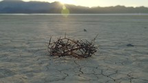 crown of thorns on dry land