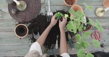 a woman putting potting soil into clay pots and planting plants