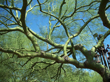 A green tree trunk with green branches stretches against a clear blue sky looking like something alien or not of this earth.