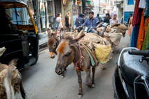 donkeys on the streets of India