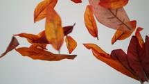 falling brown leaves
