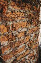 dead ivy on a brick wall