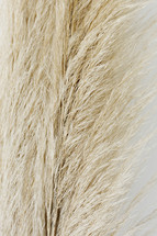 fuzzy tops of brown grasses