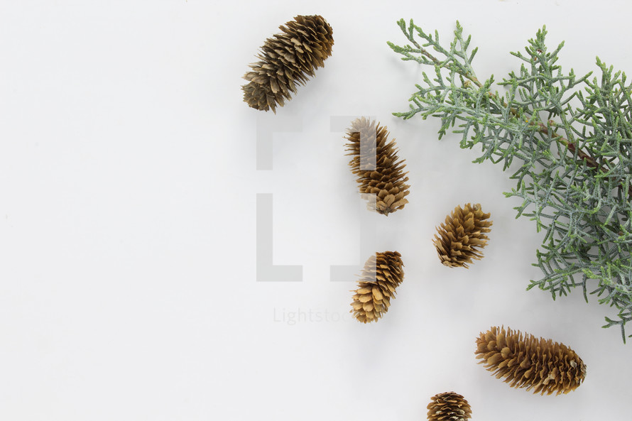 pine cones and pine boughs on white background