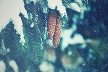 Evergreen branches Snow Background