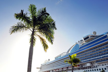 Palm tree and cruise ship