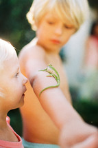 a lizard on a boys arm