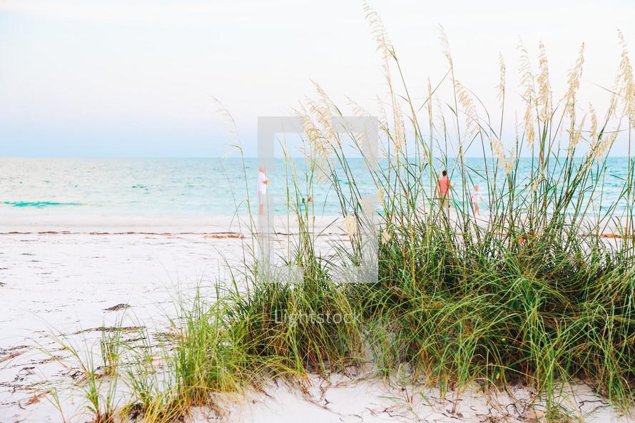 sea oats on sand dunes on a beach