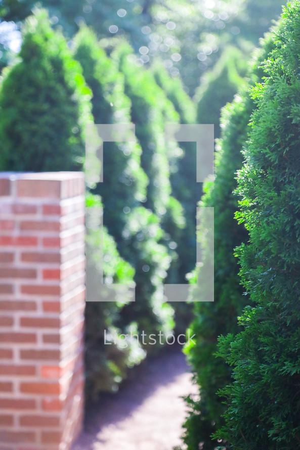 tall bushes and a brick wall