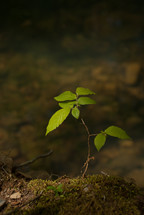 a sapling on the forest floor