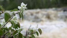 flowers against the rapids