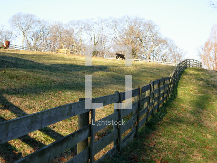 A cow field with a cow surrounded by a split rail fence and grassy knoll farm land over several acres in Virginia.