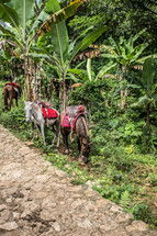horses grazing in the jungle