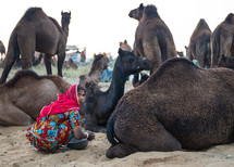 a woman sitting with camels in India