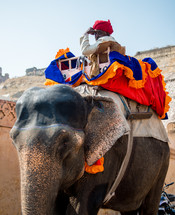 a man on an elephant in India