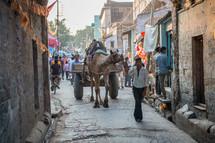 camel pulling a wagon in Mandawa, India