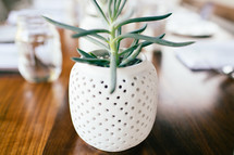 houseplant on a wood table