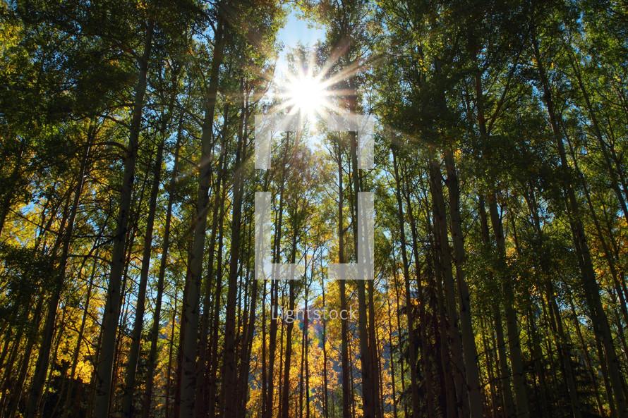 autumn trees and sun burst