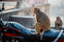 monkey on a motorcycle in India