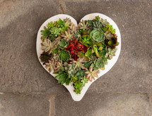 succulent plants in a heart shaped planter