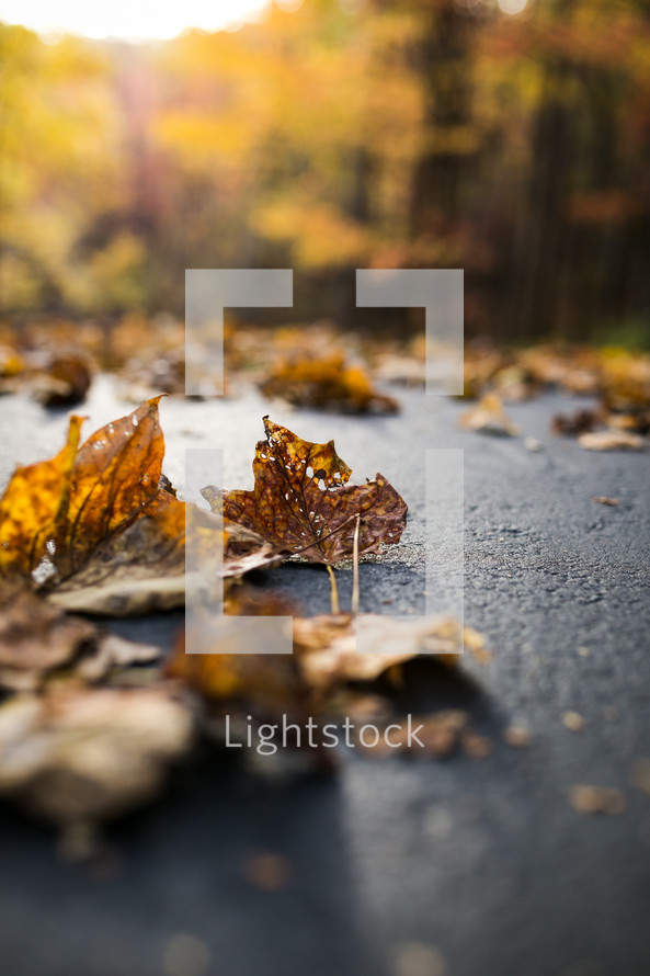 brown leaves on pavement