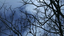 view of moving clouds through bare tree branches