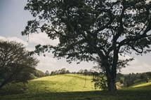 isolated tree on Kiambethu Farms