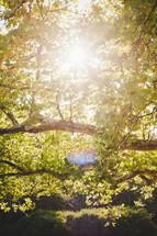 sunlight on green summer tree