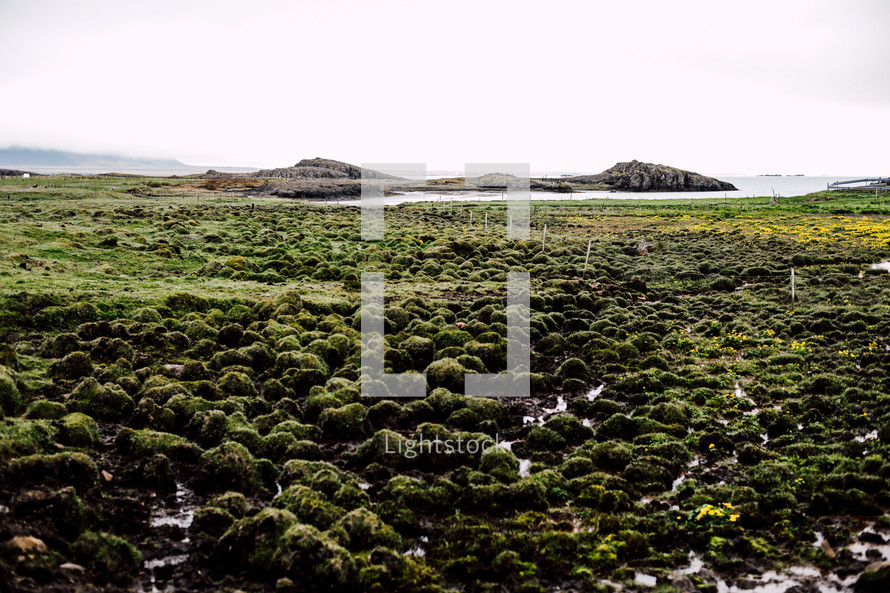 green marshy landscape in Iceland