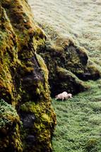 goats on a green hillside