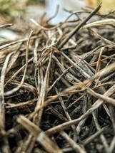 sticks and straw on the ground
