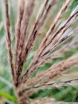 fuzzy plant twigs