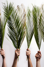 hands holding up Palm fronds on a white background