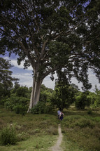 hiking on a trial under a large tree in Ethiopia