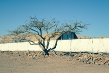 An Acacia tree form which the Tabernacle and its vessels were made. Standing in front of  the full scale model of the Tabernacle in the Timna valley, in southern Israel. Next to the Sinai desert, where the people of Israel were wandering for 40 years.